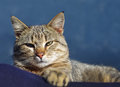 Lovely tabby cat is relaxing on the sun Stock Image