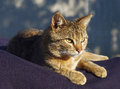 Lovely tabby cat is relaxing on the sun Stock Images