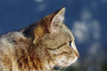 Lovely tabby cat is relaxing on the sun Stock Photos
