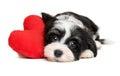 Amante cane cuore