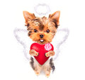 Lover valentine puppy dog with a red heart cute isolated on white background Stock Image