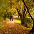 Lovers walking hand in hand autumn park Stock Image