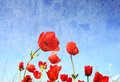 Low angle photo of red poppies against sky with light burst image is retro filter toned Stock Photography