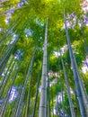 stock image of  Low angle bamboo forest at arashiyama, Kyoto