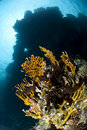 Low angle view of a pristine tropical coral reef. Royalty Free Stock Photography