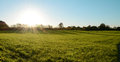 Low fall sun shines over a green meadow Royalty Free Stock Photo