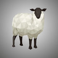 Low poly sheep. Vector illustration in polygonal style. Forest animal on white background.