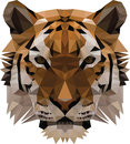 Low poly tiger illustration face animal Stock Image