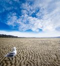 Low Tide at White Rock Beach, British Columbia Stock Photo