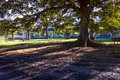 Low winter sun casting long shadows under a tree in a park copyspace Royalty Free Stock Image