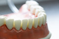 Lower jaw dental model Royalty Free Stock Photo