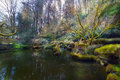 Lower Pond At Portland Japanes...
