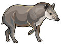 Lowland tapir side view picture white background Stock Photo