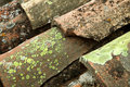 Líquene verde Foto de Stock