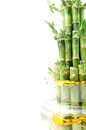 A lucky bamboo plant Royalty Free Stock Images