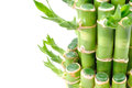 A lucky bamboo plant Royalty Free Stock Photo