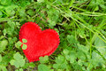Lucky clover and a heart red lying in grass meadow Stock Photography