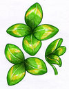 Lucky clover sketches hand drawn ink and markers of with three and four leaves Stock Images