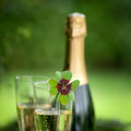 Lucky clover and sparkling wine Stock Image