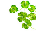 Lucky clovers Stock Photography