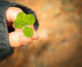 Lucky four leaf clover held in the hand of a woman Royalty Free Stock Photos