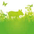 Lucky pig on the meadow green Royalty Free Stock Photography