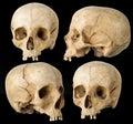 Ludzka czaszka Zdjęcie Royalty Free