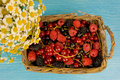 Lug full of fresh raspberries mulberries and red currants Royalty Free Stock Photography