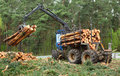 Lumber industry the harvester working in a forest Stock Photo
