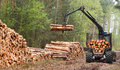 Lumber industry the harvester working in a forest Royalty Free Stock Photos