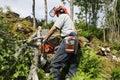 Lumberjack in action Royalty Free Stock Image