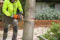A lumberjack cuts a tree with a chain saw Royalty Free Stock Photo