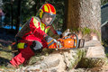 Lumberjack cutting tree in forest logger worker protective gear firewood timber with chainsaw Royalty Free Stock Image