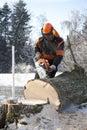 Lumberjack cutting tree Royalty Free Stock Photo