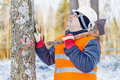 Lumberjack in the forest near tree with an ax Royalty Free Stock Photo