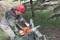 A lumberjack working with a chainsaw tree betula Stock Photography