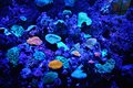 Luminance a fish tank under strong blue light producing a great luminous effect Royalty Free Stock Photography