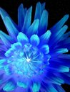Luminous neon flower Royalty Free Stock Image