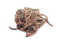 A lump of earthworms Royalty Free Stock Photo
