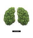 Lung of earth Royalty Free Stock Photo