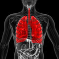 The lung medical d illustration of Royalty Free Stock Photos