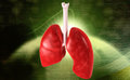 Lungs digital illustration of in coloured background Stock Images