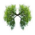 Lungs green tree isolated on white Royalty Free Stock Image