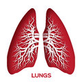 Lungs origami. Red