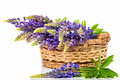 Lupine bouquet in basket on white beautiful background Royalty Free Stock Image