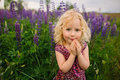Lupines field and girl Royalty Free Stock Photo