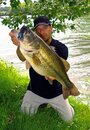 Lure fishing, massive bass fish Royalty Free Stock Photo