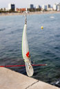 Lure and hook hanging in the line for fishing in the breakwater of barcelona Royalty Free Stock Image