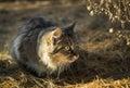 Lurker Cat