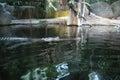 Lurking gharial in waters of prague s zoo Royalty Free Stock Photo
